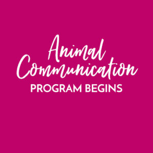 Animal Communication Program begins